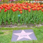 Aishwarya Rai Villa tulip flower