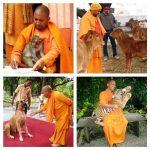 Yogi Adityanath love for animals