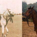 Ajay Piramal, a horse lover