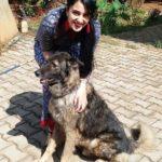 Sai Lokur Dog Lover